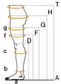 Подбор размера компрессионного трикотажа VENOTEKS в картинках